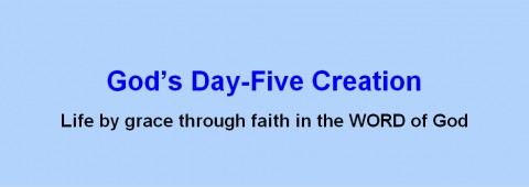 God's Day Five Creation